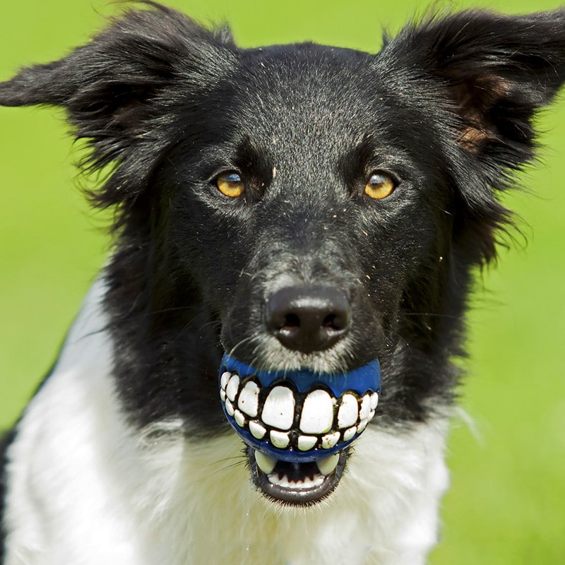 Healthy Dog Teeth